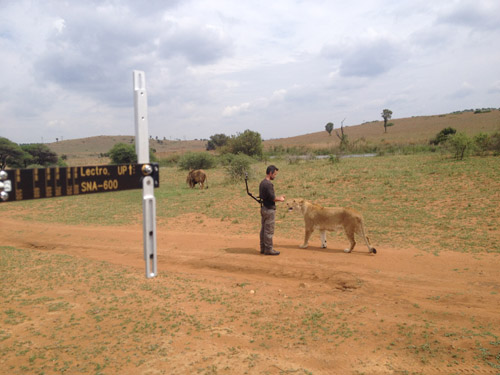 Kevin Richardson gets up close with lions and Lectrosonics